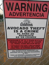 A warning sign for stealing avocados